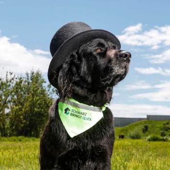 Schwarz bringt Glück Halstuch für Hunde